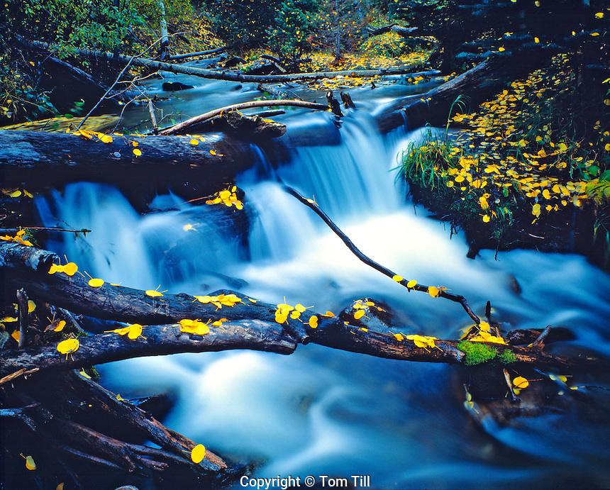 Autumn Falls and Leaves, Manti-La Sal National Forest, La Sal Mountains, Utah