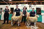 Emily Welch helps Holden Racing's Shane van Gisbergen while Sam Welch helps Jamie Whincup. Holden Supercars Sheep Shearing Contest, Franklin Showgrounds, Pukekohe, New Zealand. Thursday 1 November 2018. Photo: Simon Watts/ Bwmedia