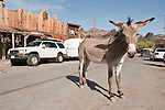A jackass stands around with ears sticking out in downtown Oatman, Ariz.