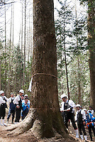 Bassai, the tree cutting ceremony above Shimosuwa during the Onbashira festival, where 16 sacred pillars are brought by hand to rejuvenate each the upper and lower Suwa Shrines in Nagano Prefecture.