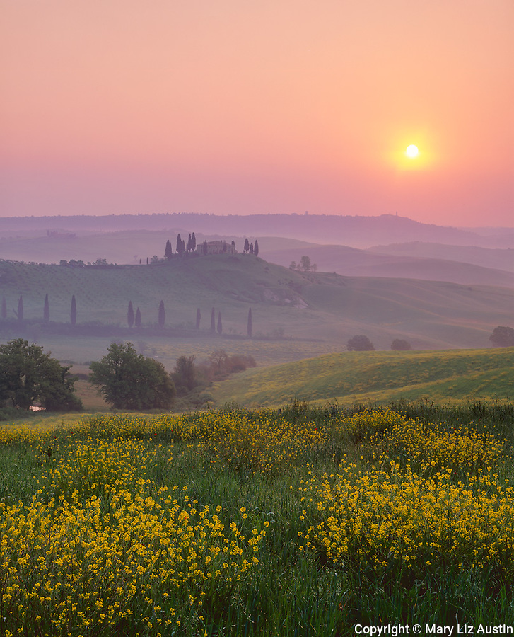 Tuscany, Italy, <br /> Sunrise over a Tuscan farmhouse standing above the fields of flowering mustard in the Val d'Orcia