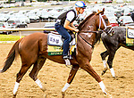JUNE 05, 2019 : Spinoff morning workouts for Belmont Stakes contenders at Belmont Park, on June 5, 2019 in Elmont, NY.  Sue Kawczynski_ESW_CSM