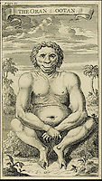BNPS.co.uk (01202 558833)<br /> Pic: Sothebys/BNPS<br /> <br /> I wanna be like yoohoohoo...<br /> <br /> The first ever depiction of an Orang Utang seen in the West has been uncovered in a rare 1718 first edition of explorer Daniel Beeckman's 'A Voyage to the and from the Island of Borneo'.<br /> <br /> The image reveals a remarkably human like creature called 'Oran Ootan' or 'Men of the Woods' by the native population of the remote island. <br /> <br /> Beeckman described the creatures as having 'tolerable good faces &amp; handsomer than some hottentots I have seen'<br /> <br /> He sailed to Borneo in the 'Eagle Galley' in 1713  describing it as 'the greatest island of all the Indian seas'<br /> <br /> He published the book in 1718 to try to advance his ideas on trade with the exotic land and was the first time that Georgian Britain had seen such a creature.