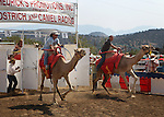 Charlie Dillon, left, and Rich Martin race at the International Camel Races in Virginia City, Nev., on Friday, Sept. 9, 2011. .Photo by Cathleen Allison