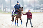 November 1, 2018: Expert Eye (GB), trained by Sir Michael R. Stoute, exercises in preparation for the Breeders' Cup Mile at Churchill Downs on November 1, 2018 in Louisville, Kentucky. Alex Evers/Eclipse Sportswire/CSM
