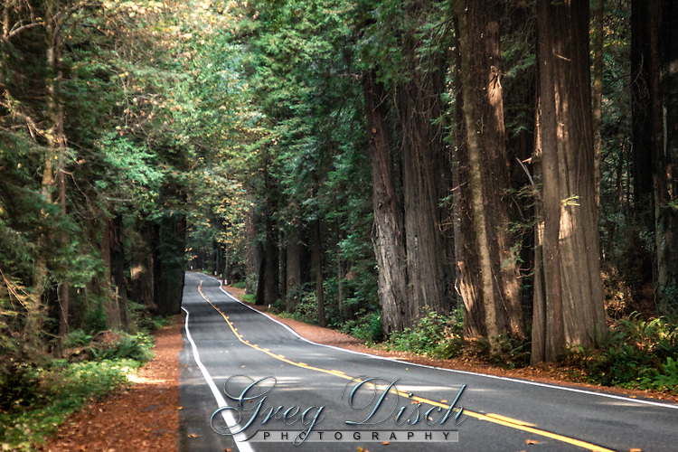 Avenue of the Giants Redwood National Park 20151016-_MG_6289