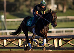 OCT 21: Elate prepares for the Breeders' Cup Classic at Santa Anita Park in Arcadia, California on Oct 21, 2019. Evers/Eclipse Sportswire/CSM