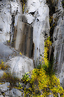 &quot;GRANITE &amp; WILDFLOWERS&quot;<br />