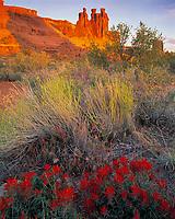 Indian Paintbrush & Three Gossips, Arches National Park, Utah   Castilleja chromosa
