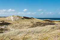 Dunes at Sandy Neck Beach Park, Barnstable, Cape Cod, Massachusetts, MA, USA