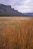 A grassland sits in the shadow of a mountain in the Madison River valley, Yellowstone National Park, Wyoming
