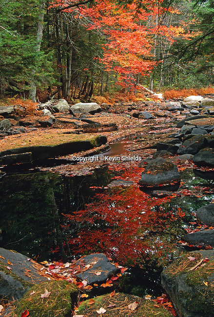 The Ducktrap River, Lincolnville, Maine, USA