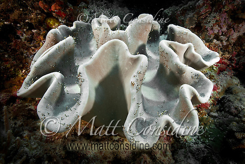 Unusual coral Growth, Palau Micronesia. (Photo by Matt Considine - Images of Asia Collection) (Matt Considine)