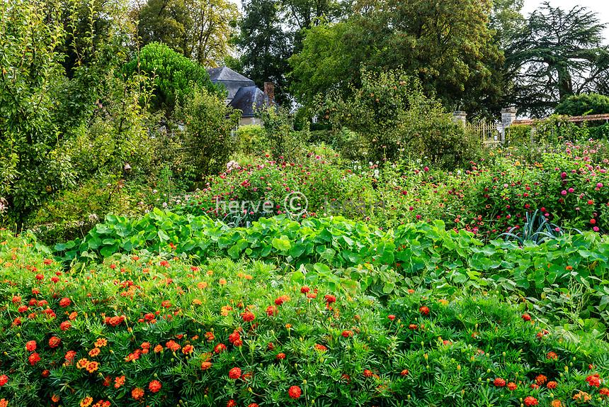 France, Sarthe (72), Le Lude, château et jardins du Lude, le potager,  tagètes, grandes capucines, zinnias