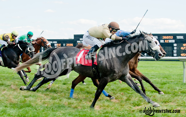 Take the Offer winning at Delaware Park on 8/24/2013