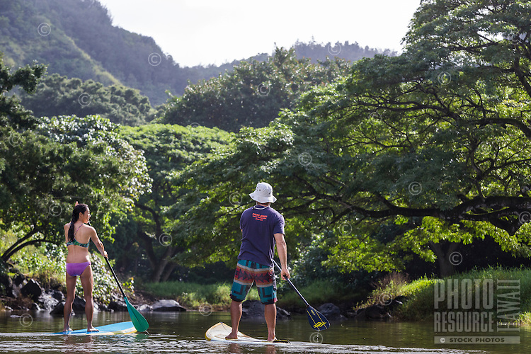 A couple of standup paddlers explore Waimea River, with Waimea Valley in the distance, North Shore, O'ahu.
