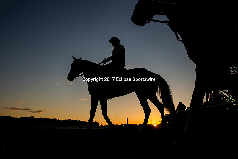 ELMONT, NY - JUNE 09: Horses hit the track at first light at Belmont Park on June 9, 2017 in Elmont, New York. (Photo by Alex Evers/Eclipse Sportswire/Getty Images)
