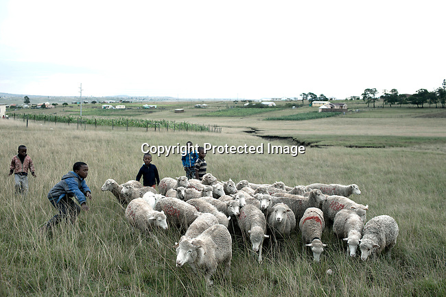 QUNU SOUTH AFRICA - MARCH 28: A boys herdd their family sheep on March 28, 2012 in Qunu, South Africa. Nelson Mandela was born in a rural village called Mvezo in 1918 and he moved to nearby Qunu as a young boy. Mvezo is about 32 kilometers away. (Photo by Per-Anders Pettersson)