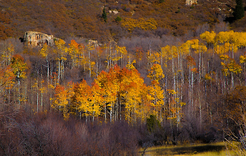 Fall has arrived on a hillside in the Southern Utah landscape
