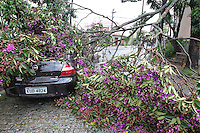 SÃO PAULO, SP, 08/02/2013, QUEDA ARVORE. Parte de uma árvore caiu sobre dois veiculos na Rua Porto Feliz no bairro da Mooca, devido a chuva desse Domingo (10). Luiz Guarnieri/ Brazil Photo Press