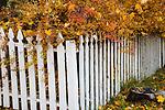Idaho, North, Kootenai County, Coeur d'Alene. Autumn foliage overgrows a white picket fence.