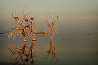 July 31, 2007_Calipatria, CA - A view of the Salton Sea at sunrise near Sonny Bono State Park.