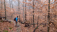 NWA Democrat-Gazette/FLIP PUTTHOFF<br />Some trees along the 1.1-mile loop trail at Alum Cove still had their leaves on Dec. 22 2017.