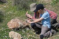 Kinder fotografieren und beobachten Schwarze Mörtelbiene, an ihren Brutzellen aus Sand, Lehm und Steinchen, Megachile parietina, Chalicodoma parietinum, Chalicoderma muraria, wall bee, mason bee, Mortar bee