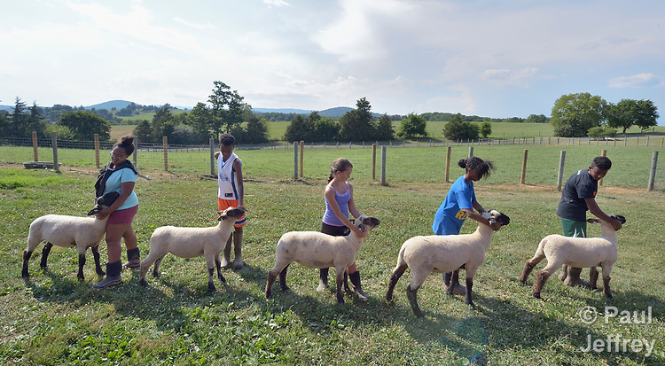 Boys and girls, including resettled refugees from Ethiopia and Eritrea, brace their sheep in Linville, Virginia, on July 17, 2017. The youth are preparing to show sheep and goats in a county fair.<br /> <br /> The refugees were resettled in the Harrisonburg, Virginia, area by Church World Service. <br /> <br /> Photo by Paul Jeffrey for Church World Service.
