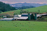 Sheep farm near Crabtree<br />