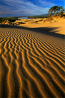 769550137 sunset light creates a three-dimensional ripple effect on the sand dunes at oregon dunes national recreation area along the pacific coast of oregon