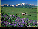 I lost a lot of good images by leaving soon after the 'golden' light had cooled. This morning I waited quite awhile for the lupine wildflowers to receive full morning sun. They were perfectly positioned on an uphill slope, so I could easily place them relative to the homestead and Wilson Peak, Colorado.<br />