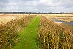 Green grass path between reeds on the flood defence sea wall near Shingle Street, Suffolk, England, UK
