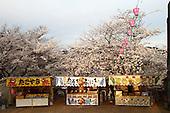 Mar 29, 2010; Nagasaki, JPN - Sakura at Tateyama Park.