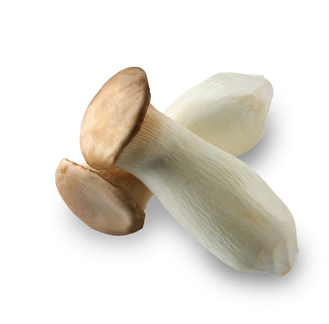 Fresh picked Pleurotus eryngii mushroom , also known as king trumpet mushroom, French horn mushroom, king oyster mushroom, king brown mushroom, boletus of the steppes or trumpet royale, cut out against a white background