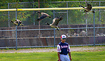 TORRINGTON,  CT-072419JS24--A flock of geese fly past CC Armour's Jeremiah Sanchez (3) as he plays left field during their Mickey Mantle World Series game agains the Wolcott Storm Wednesday at Fuessenich Park in Torrington. <br />  Jim Shannon Republican American