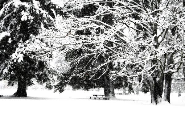 Christmas Snow, Kenmore Washington