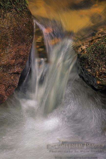 Stream (detail) Big Basin State Park, Santa Cruz County, California