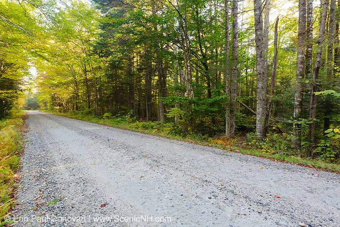 Gale River Forest - Autumn foliage along the Gale River Road in the White Mountains, New Hampshire USA