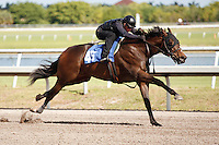 #45Fasig-Tipton Florida Sale,Under Tack Show. Palm Meadows Florida 03-23-2012 Arron Haggart/Eclipse Sportswire.