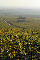 Europe/Hongrie/Tokay/Env Sarospatak: Les vignes du château Megyer
