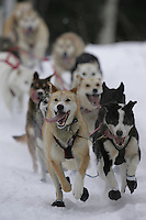 Perry Solomonson's team on trail shortly after leavingWillow Restart Day.  2005 Iditarod Sled Dog Race