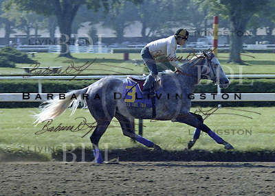 Pass the Tab (Al Hattab) won the Jersey Derby, Monmouth Invitational, Fountain of Youth and several other stakes, earning nearly $500,000.  Saratoga 1981