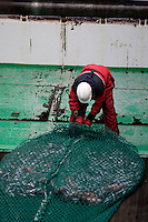 Deckhand untying bag of  pelagic fishing net on trawl deck. Barents sea, Arctic Norway