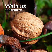 Walnuts Pictures | Walnuts Photos Images & Fotos