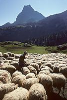 Europe/France/Aquitaine/64/Pyrénées-Atlantiques/Parc National des Pyrénées/Pic du Midi-d'Ossau: Berger et troupeau de brebis<br /> PHOTO D'ARCHIVES // ARCHIVAL IMAGES<br /> FRANCE 1980