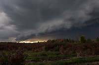 Rolling front over blueberry field in Bangor, Michigan.