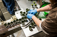 Higher Standard Packaging containers about to be filled with marijuana at the Terrapin Care Station production facility in Aurora, Colorado, Thursday, January 12, 2017. The business makes containers and packaging for cannabis dispensaries and cannabis edibles/concentrates companies, including white plastic canisters made out of recycled milk jugs.<br /> <br /> Photo by Matt Nager