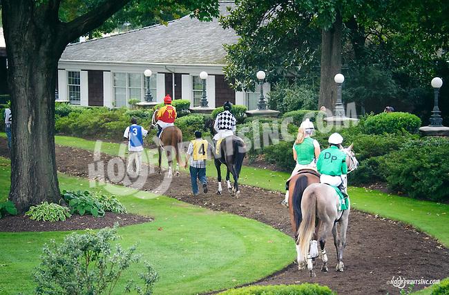 arabians in the paddock before The Buzz Brauninger Arabian Distaff Handicap (grade 1) at Delaware Park on 9/5/15