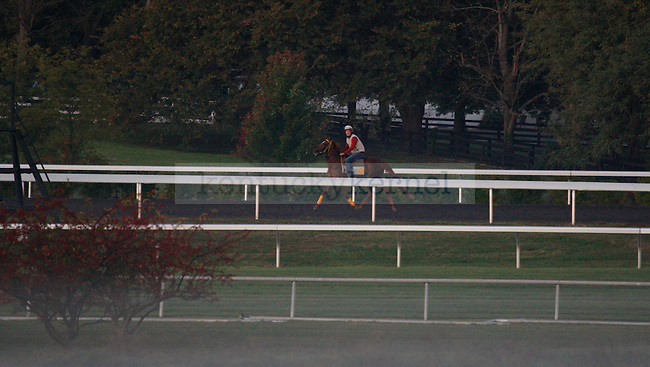 A horse during the morning workout at Keeneland Racetrack in Lexington, Ky., on Wednesday, Oct. 5, 2011. Photo by Tessa Lighty | Staff